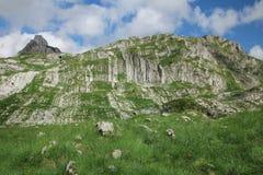 Montenegro Durmitor Park Narodowy Durmitor jest t i górą zdjęcia stock