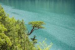 Montenegro Durmitor Park Narodowy Piva rzeki jar fotografia royalty free