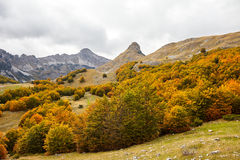 Montenegro, Herbst, Wald, Berge Lizenzfreie Stockfotos