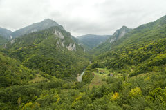 montenegro Het Nationale Park van Durmitor Tara River Canyon Stock Fotografie