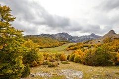 Montenegro, jesień, las, góry Fotografia Royalty Free