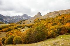 Montenegro, jesień, las, góry Zdjęcia Royalty Free