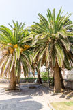 Montenegro: Palmen im alten Budva Lizenzfreie Stockbilder