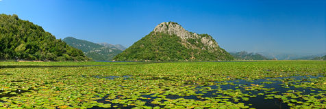 Montenegro skadar Lake Royalty Free Stock Photography