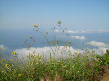 Montenegro. View from the top of the mountain on the island of St. Nicholas Stock Photography