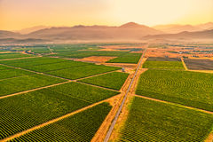 Montenegro vineyards field - aerial Stock Photography