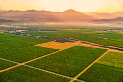 Montenegro vineyards field - aerial Royalty Free Stock Images