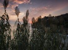montenegro Zonsondergang De laatste stralen van de Zon gaat door het riet over Royalty-vrije Stock Foto