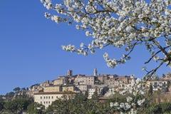 Montepulciano arkivbild