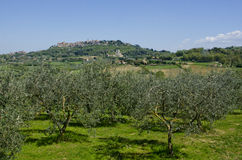 Montepulciano Italien Arkivbild