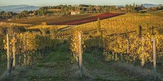 MONTEPULCIANO - TUSCANY/ITALY, O 29 DE OUTUBRO DE 2016: Uma grande opinião da paisagem idílico sobre o campo de Montepulciano, co foto de stock