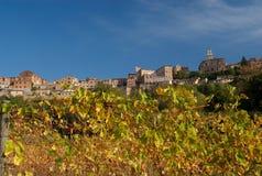 Montepulciano y vides de uva Foto de archivo libre de regalías