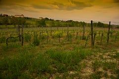montepulcianotuscany vingårdar Arkivbild