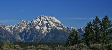 Montera Moran av storslagen på våren för Tetons bergskedja/sommar i Wyoming arkivbild