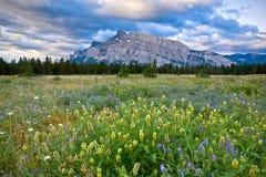 Montera Rundle och lösa blommor, den Banff nationalparken Royaltyfri Foto