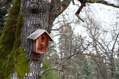 monterad birdhouse Arkivfoto