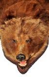 monterat björnhuvud Arkivfoton