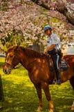 Monterat parkera polisen på Jefferson Memorial Arkivbild