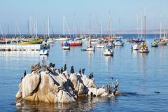 Monterey Royalty Free Stock Photography