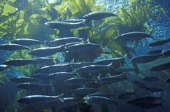 Monterey Aquarium, Monterey, CA Stock Image