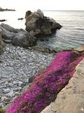 Monterey Bay rock formation pink flock ground cover Royalty Free Stock Photos