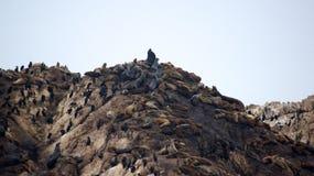 MONTEREY, CALIFÓRNIA, ESTADOS UNIDOS - 6 DE OUTUBRO DE 2014: A rocha do pássaro é uma das paradas as mais populares ao longo do p Imagens de Stock