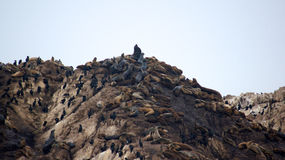 MONTEREY, CALIFORNIË, VERENIGDE STATEN - OCT 6, 2014: De vogelrots is één van de populairste einden langs de 17-mijl Aandrijving stock afbeeldingen