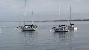Monterey, California, Estados Unidos - 17 de octubre de 2015: Los tableros de paleta y los veleros en el ancla todavía riegan al  almacen de video