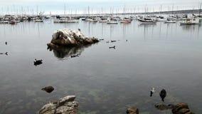 Monterey California sella los barcos y las rocas de los pájaros almacen de metraje de vídeo