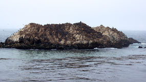MONTEREY, CALIFORNIA, UNITED STATES - OCT 6, 2014: Bird Rock is one of the most popular stops along the 17-Mile Drive Royalty Free Stock Photo