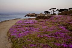 Monterey Coast California Royalty Free Stock Photos
