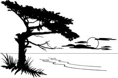 Monterey Cypress. Silhouette of a Cypress overlooking the ocean vector illustration