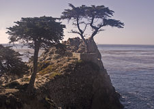 Monterey Cypress Pines. This is a picture of Monterey cypress pines on the Pacific Coast near Monterey Stock Photos
