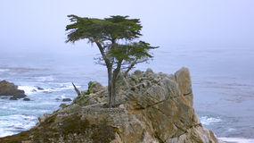 MONTEREY, KALIFORNIA STANY ZJEDNOCZONE, OCT, - 6, 2014: Samotny cyprys, widzieć od 17 mil przejażdżki w otoczak plaży, CA obraz royalty free