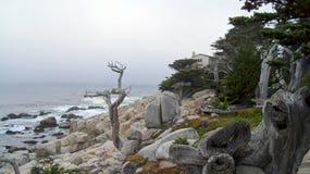 MONTEREY, KALIFORNIA STANY ZJEDNOCZONE, OCT, - 6, 2014: Samotny cyprys, widzieć od 17 mil przejażdżki w otoczak plaży, CA Fotografia Stock