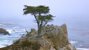 MONTEREY KALIFORNIEN, FÖRENTA STATERNA - OKTOBER 6, 2014: Den ensamma cypressen som ses från det 17 mil drevet, i Pebble Beach, C Royaltyfri Bild