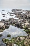 Monterey przypływu basen Fotografia Stock