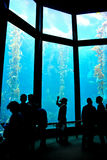 Monterey-Schachtaquarium Lizenzfreies Stockbild