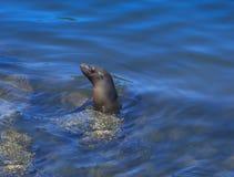 Monterey skyddsremsa Arkivbilder