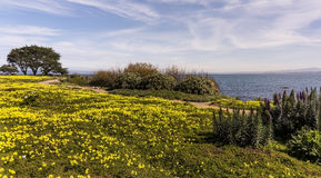 Monterey in Spring Stock Photography