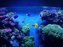 Montereyaquarium royalty-vrije stock afbeeldingen