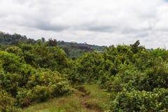 Montering Aberdar i dimman Kenya Afrika Arkivbild