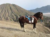 Montering Bromo med en lokal häst Royaltyfria Bilder