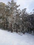 Montering Buller, Melbourne, Australien i vinter arkivbild