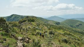 Montering Ole Sekut, södra Rift Valley, Kenya Royaltyfria Foton