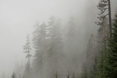 Montering Rainier Fog royaltyfri bild