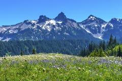 Montering Rainier National Park W för paradis för vildblommaTatoosh område Arkivfoto