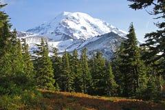 Montering Rainier National Park, Washington, USA Arkivbild