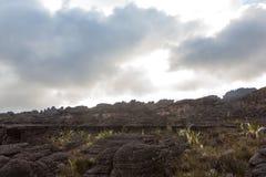 Montering Roraima Arkivfoto