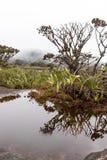 Montering Roraima Royaltyfria Foton
